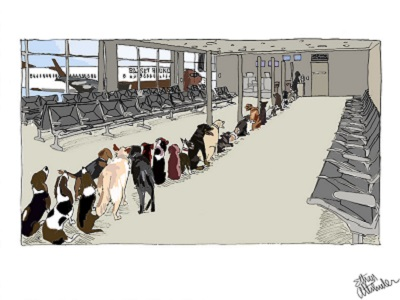 Basset Hound Airlines Dogs Waiting