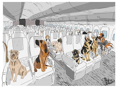 Dogs in Flight Economy Class